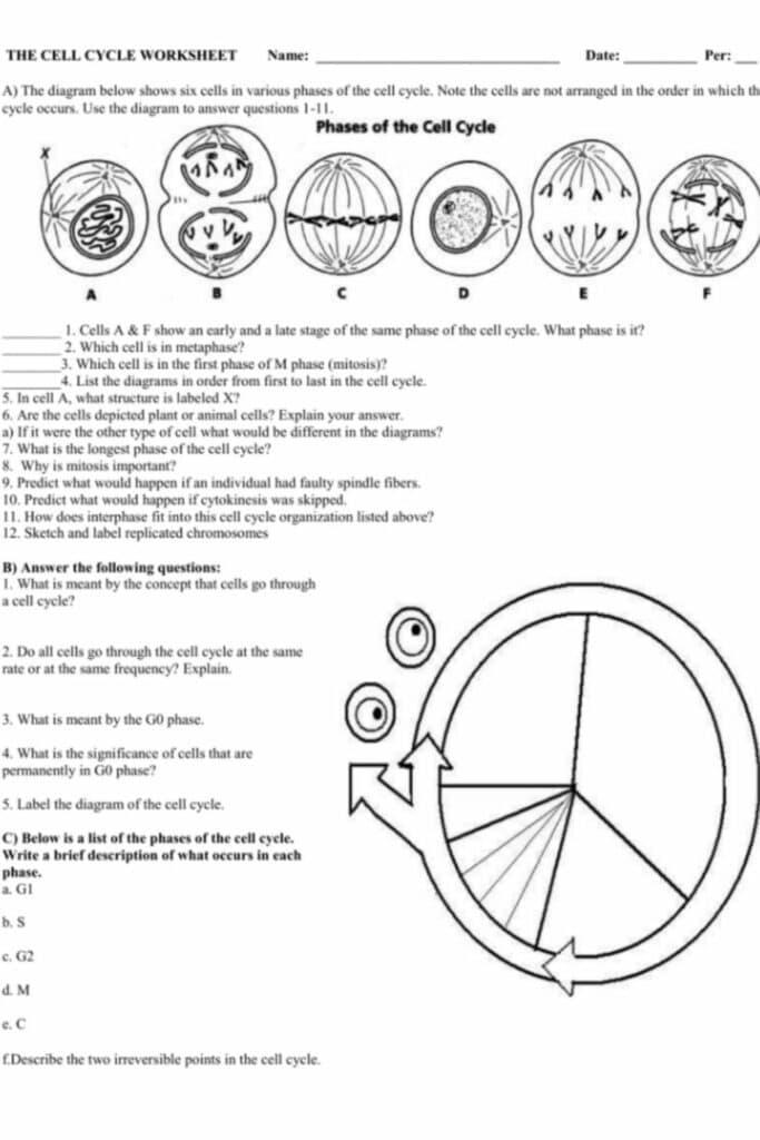 Cells Alive Worksheet Answer Key 5
