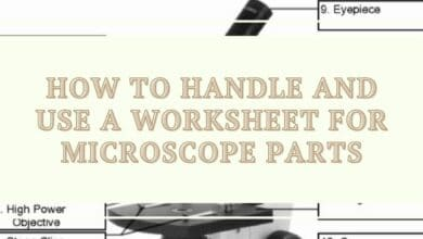 How to Handle and Use a Worksheet for Microscope Parts 4