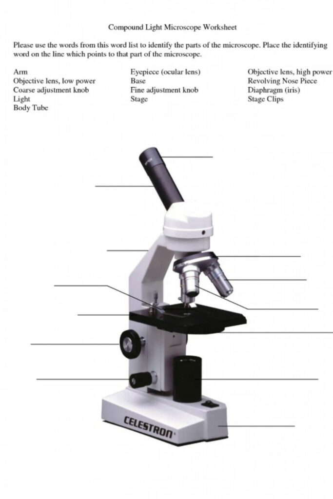 How to Handle and Use a Worksheet for Microscope Parts 5